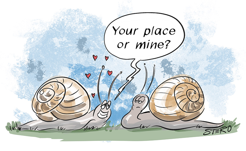 Cartoon about dating and love. One snail asks the other while flirting: Your Place or mine?